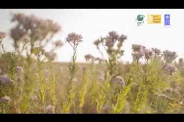 Вбудована мініатюра для Екомережа - сучасний крок збереження довкілля